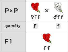 Schéma kríženia recesívneho a dominantného homozygota pri úplnej dominancii (monohybridizmus)