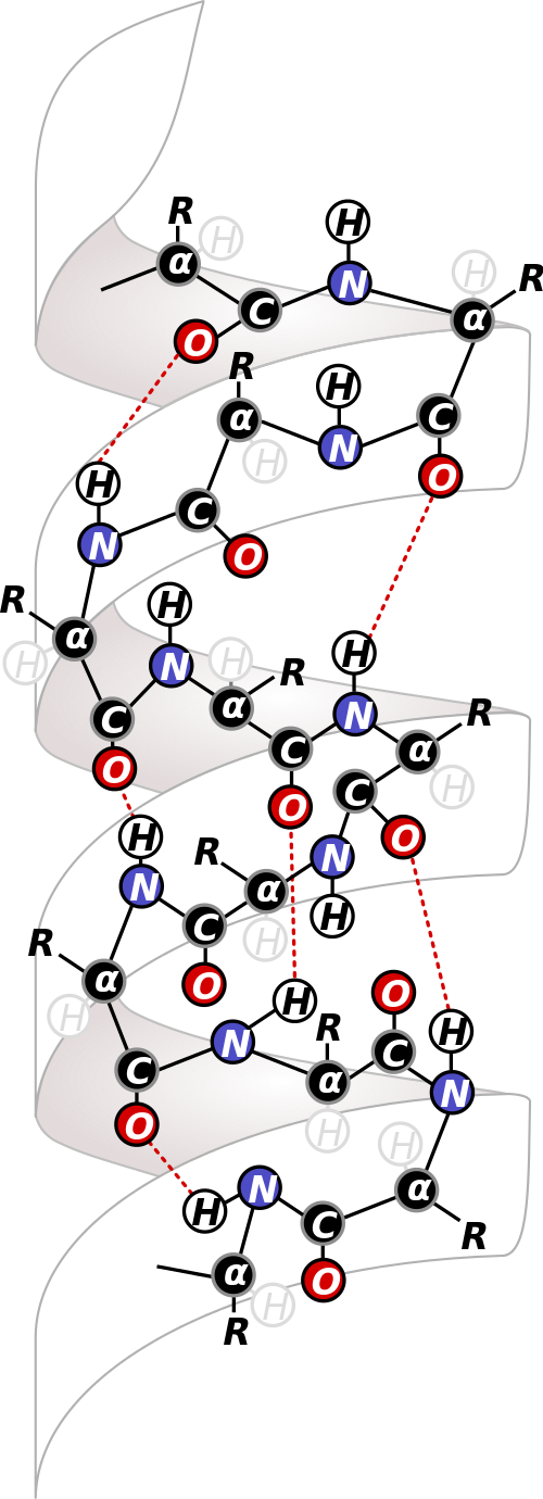 Sekundárna štruktúra skrutkovice