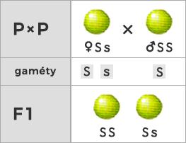 Spätné kríženie s dominantným homozygotom (fenotyp - uniformný)