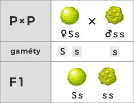 Spätné kríženie s recesívnym homozygotom (fenotyp - 1 : 1)
