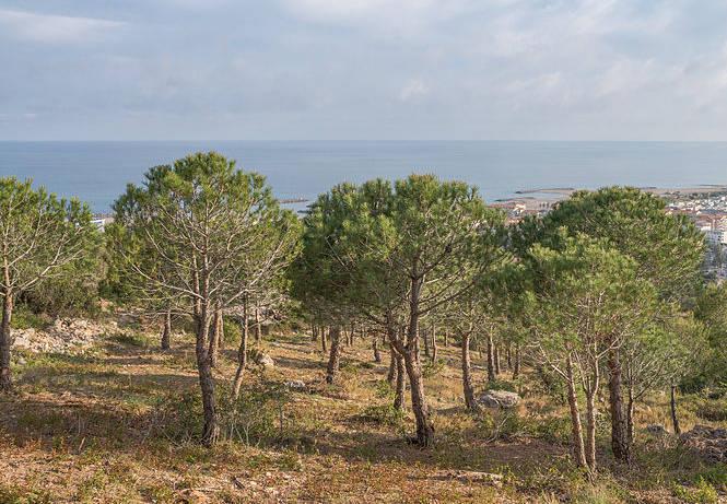 Stredozemný tvrdolistý les