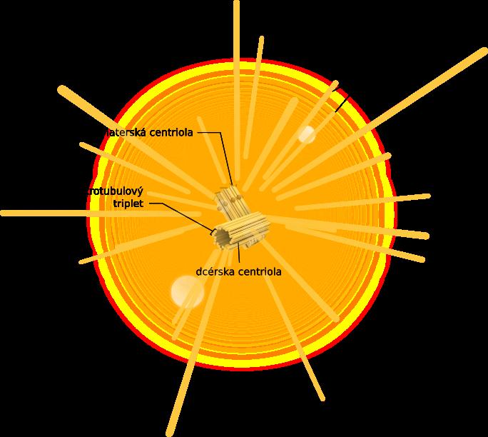 Štruktúra centrozómu