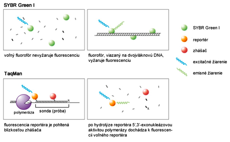 Porovnanie fluorescencie SYBR Green I a TaqMan