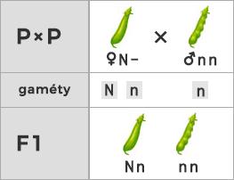 Schéma testovacieho kríženia (rodič je heterozygot)