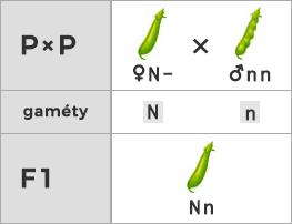 Schéma testovacieho kríženia (rodič je homozygot)
