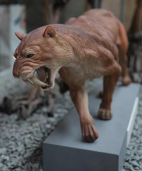 Tiger šabľozubý