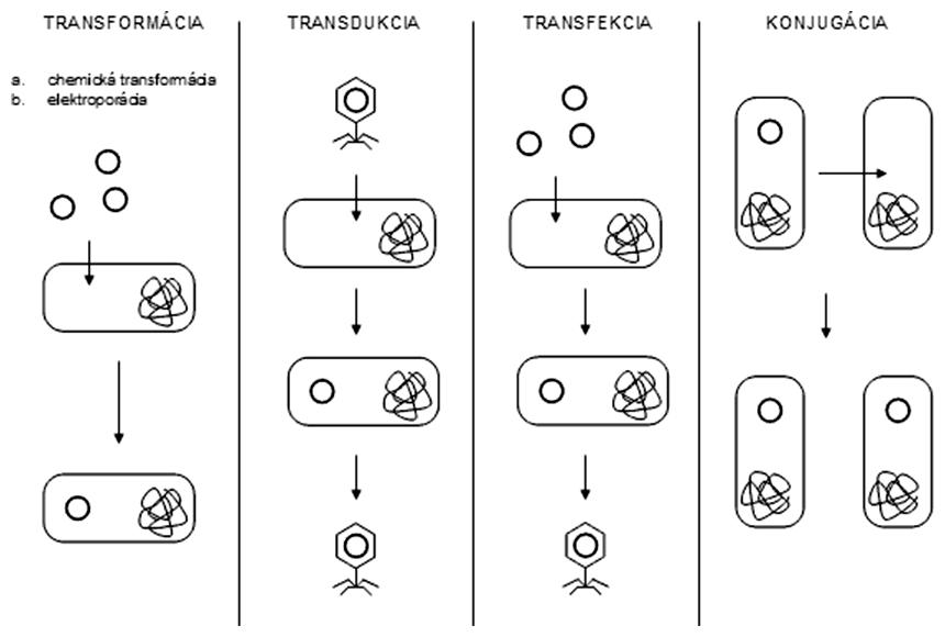 Možnosti transformácie buniek