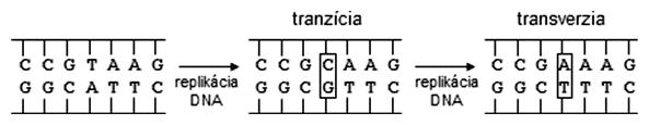 Schéma tranzície a transverzie