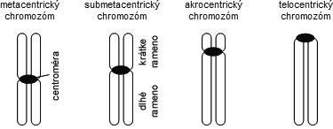 Typy chromozómov podľa polohy centroméry