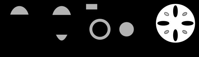 Typy cievnych zväzkov