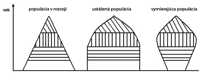 Typy vekových pyramíd