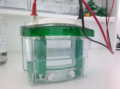 Vertikálna SDS-PAGE elektroforéza