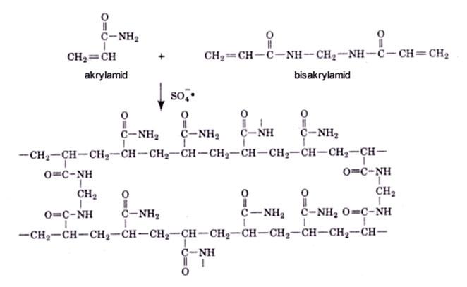 Vetvenie akrylamidu a tvorba gélovej matrice