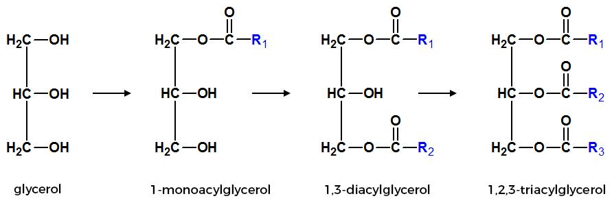 Všeobecné vzorce acylglycerolov