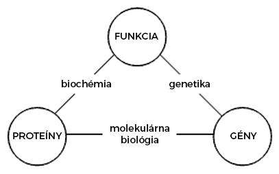 Vzťah medzi molekulárnou biológiou, biochémiou a genetikou