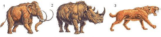 Zástupcovia fauny kenozoika (1 mamut srstnatý, 2 nosorožec srstnatý, 3 tiger šabľozubý)