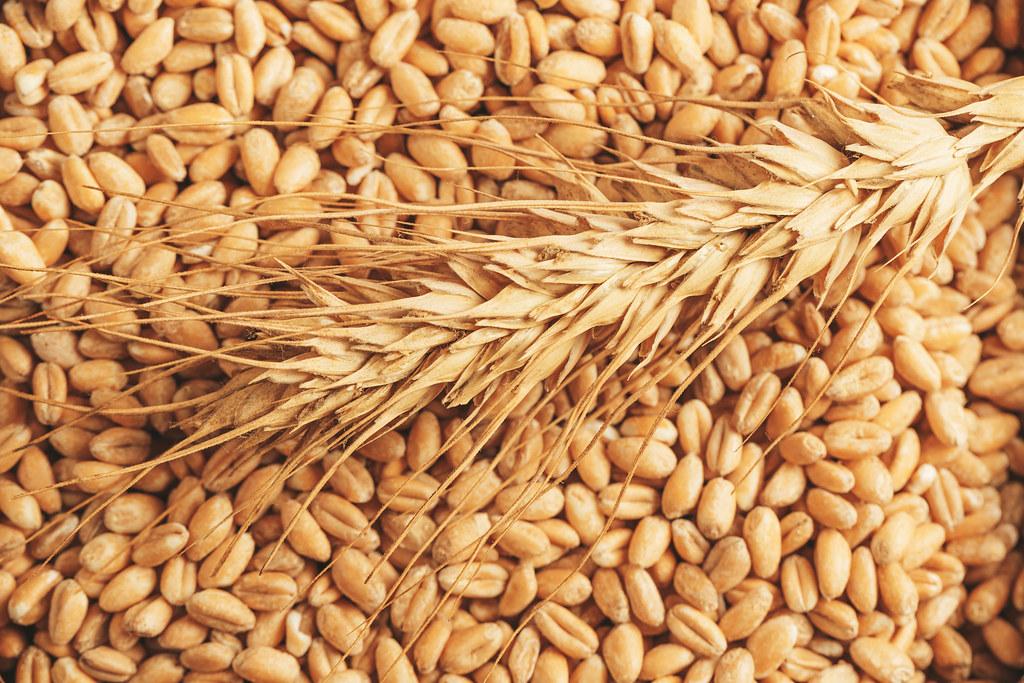 Zrno (pšenica)